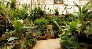 ظرفیت پذیرش و انتخاب رشته دکتری علوم و مهندسی باغبانی سراسری و دانشگاه آزاد 97