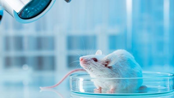 دفترچه سوالات کنکور ارشد رشته زیست شناسی جانوری