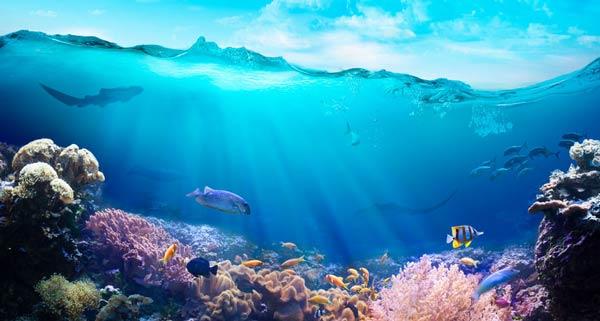 دفترچه سوالات کنکور ارشد رشته زیست شناسی دریا