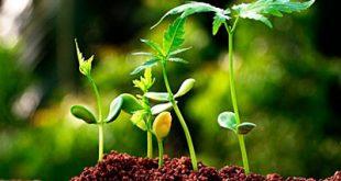 آخرین تراز و رتبه قبولی رشته علوم و مهندسی باغبانی دانشگاه آزاد