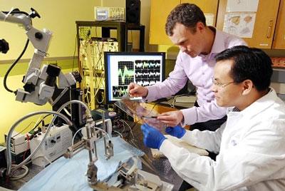 آخرین تراز و رتبه قبولی رشته مهندسی پزشکی دانشگاه آزاد