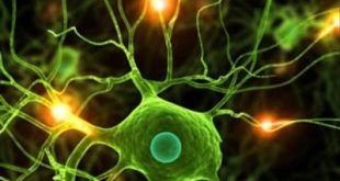 آخرین رتبه و تراز قبولی رشته زیست شناسی سلولی و مولکولی دانشگاه آزاد