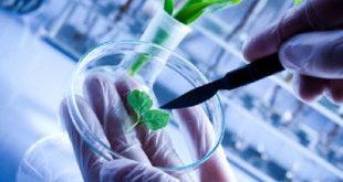 آخرین رتبه و تراز قبولی رشته زیست فناوری دانشگاه آزاد