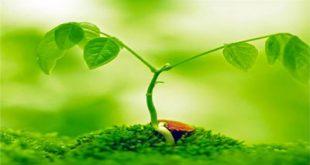 آخرین رتبه و تراز قبولی رشته گیاه پزشکی دانشگاه آزاد