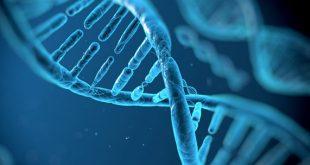 منابع آزمون دکتری رشته ژنتیک مولکولی