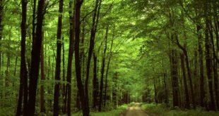 منابع آزمون دکتری رشته علوم و مهندسی جنگل - مدیریت جنگل