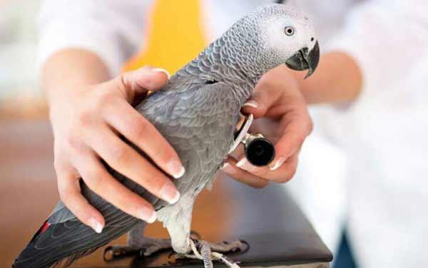 منابع آزمون دکتری رشته بهداشت و بیماری های پرندگان