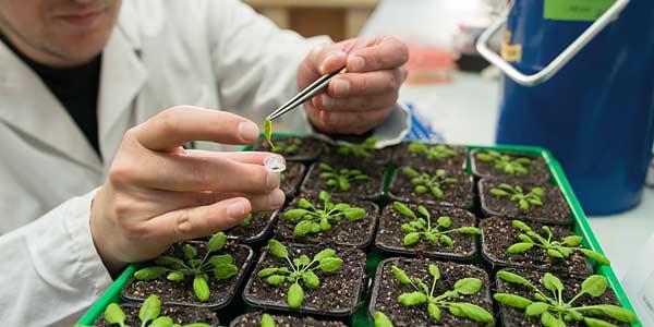 منابع آزمون دکتری رشته بیماری شناسی گیاهی