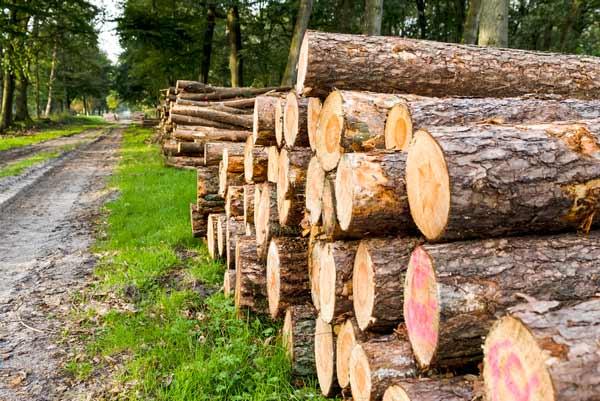 بهترین منابع آزمون دکتری رشته علوم و مهندسی عمران و بهره برداری جنگل 1400