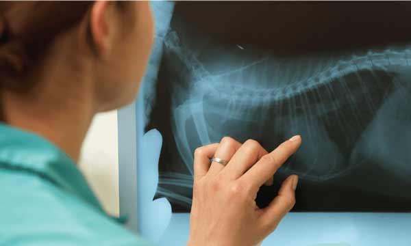 منابع آزمون دکتری رشته رادیولوژی دامپزشکی