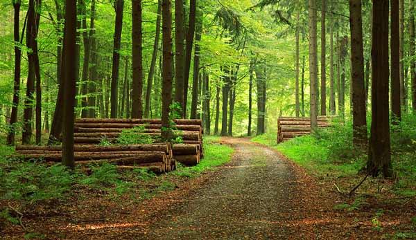 منابع آزمون دكتري رشته علوم و مهندسي علوم زيستي جنگل