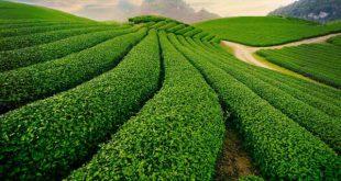 منابع آزمون دکتری رشته ترویج و آموزش کشاورزی پایدار