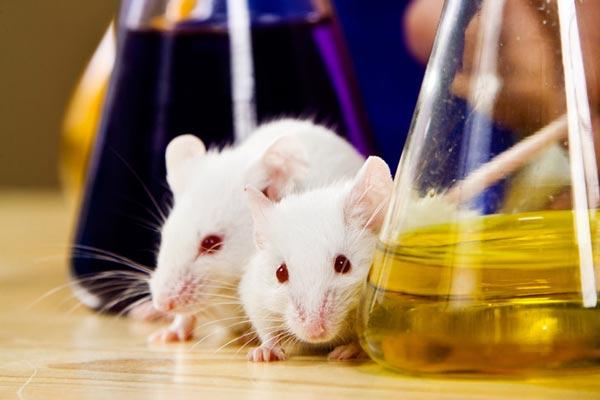 کارنامه و رتبه قبولی زیست شناسی جانوری - بیوسیستماتیک دکتری دانشگاه سراسری 99 - 1400
