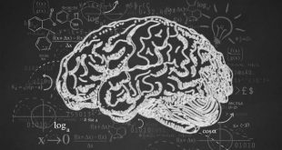 کارنامه و رتبه قبولی رشته علوم شناختی - علوم اعصاب شناختی مقطع دکتری دانشگاه سراسری