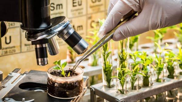 کارنامه و رتبه قبولی رشته زیست شناسی گیاهی - سیستماتیک دکتری سراسری 97 - 98