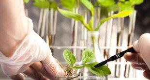 کارنامه و رتبه قبولی رشته زیست شناسی گیاهی - بوم شناسی مقطع دکتری دانشگاه سراسری
