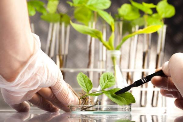 کارنامه و رتبه قبولی زیست شناسی گیاهی - بوم شناسی دکتری دانشگاه سراسری 99 - 1400