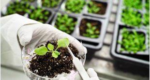کارنامه و رتبه قبولی رشته زیست شناسی گیاهی - فیزیولوژی مقطع دکتری دانشگاه سراسری