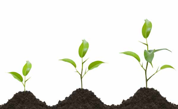 کارنامه و رتبه قبولی گیاه پزشکی آزاد 97 - 98