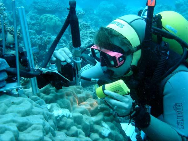 کارنامه و رتبه قبولی زیست شناسی دریا دکتری سراسری 97 - 98
