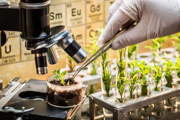 کارنامه و رتبه قبولی مهندسی تولید و ژنتیک گیاهی 97 - 98