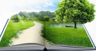 آخرین رتبه قبولی مهندسی طبیعت دانشگاه سراسری