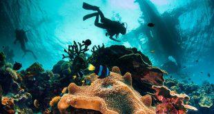 آخرین رتبه قبولی زیست شناسی دریا دانشگاه سراسری