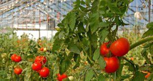 آخرین رتبه قبولی علوم و مهندسی باغبانی دانشگاه سراسری