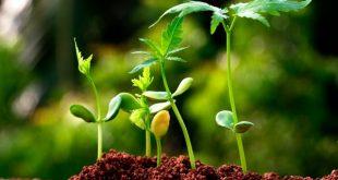 منابع کنکور کارشناسی ارشد رشته زیست شناسی گیاهی