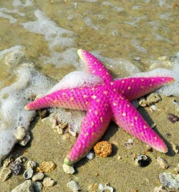 معرفی منابع کنکور ارشد رشته زیست شناسی دریا 1400