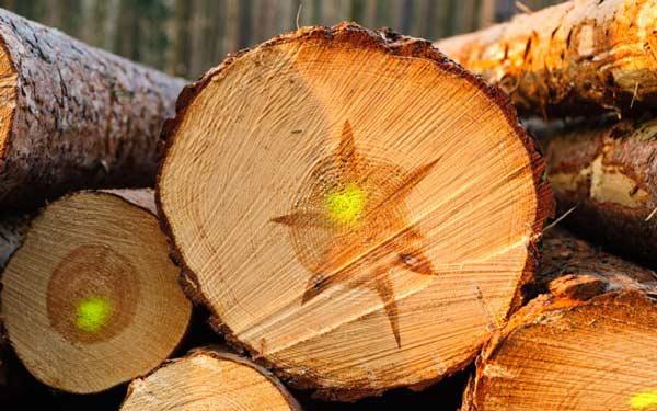 معرفی منابع ارشد رشته مهندسی صنایع چوب و فرآورده های سلولزی 1400