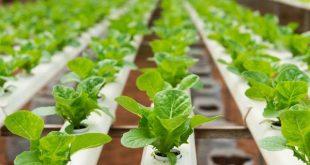 ثبت نام آزمون کارشناسی ارشد فراگیر پیام نور رشته بیوتکنولوژی کشاورزی