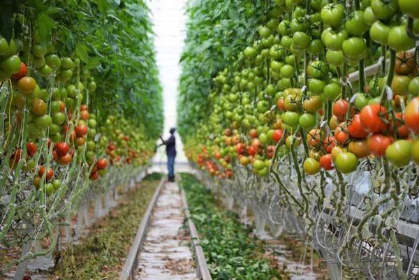 ثبت نام بدون کنکور دانشکده کشاورزی شیروان 99