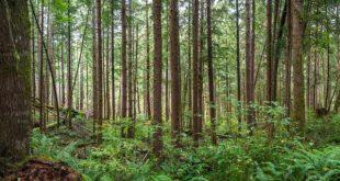کارنامه و رتبه قبولی رشته علوم و مهندسی جنگل مقطع دکتری دانشگاه سراسری