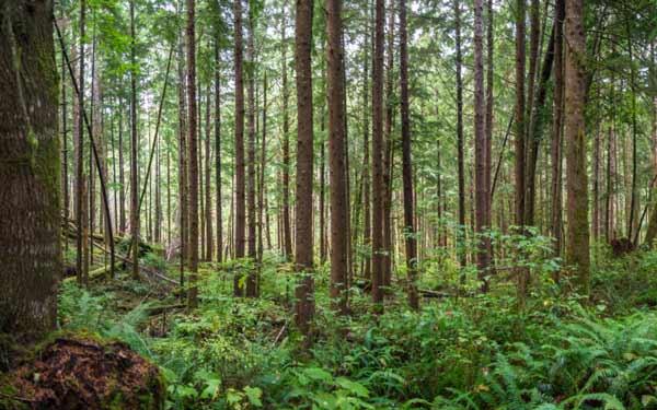 کارنامه و رتبه قبولی رشته علوم و مهندسی جنگل مقطع دکتری دانشگاه سراسری 98
