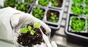 کارنامه و رتبه قبولی رشته بیوتکنولوژی کشاورزی مقطع دکتری دانشگاه سراسری