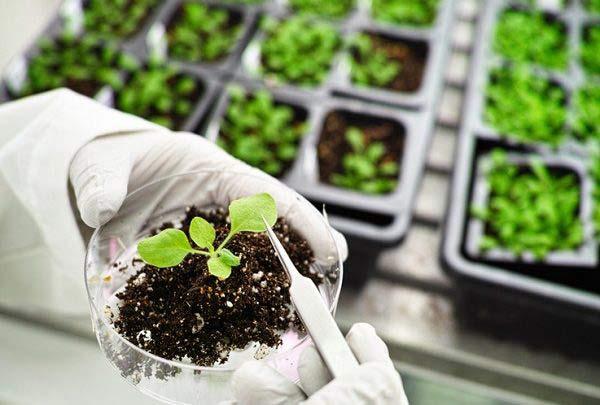 رتبه قبولی بیوتکنولوژی کشاورزی دکتری دانشگاه سراسری 99 - 1400