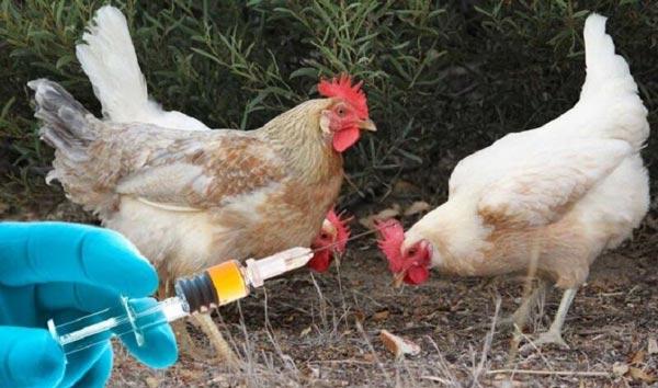 تراز قبولی بهداشت و بیماری پرندگان دکتری دانشگاه سراسری 98 - 99