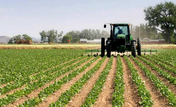 رتبه قبولی توسعه کشاورزی دکتری دانشگاه سراسری 99 - 1400