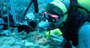 کارنامه و رتبه قبولی رشته دینامیک اقیانوسی مقطع کارشناسی ارشد دانشگاه سراسری