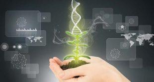 کارنامه و رتبه قبولی رشته ژنتیک و به نژادی گیاهی مقطع دکتری دانشگاه سراسری