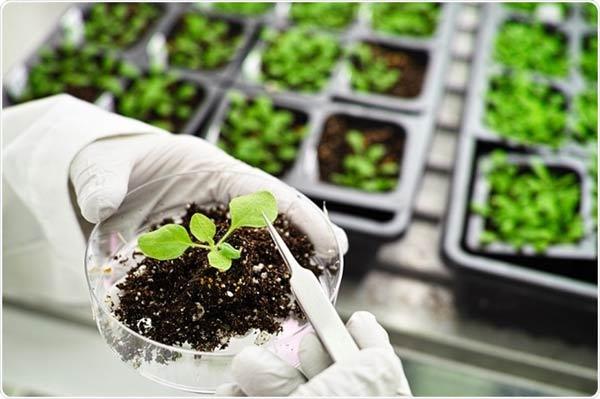 کارنامه و رتبه قبولی رشته زیست گیاهی فیزیولوژی دکتری دانشگاه آزاد 98 - 99