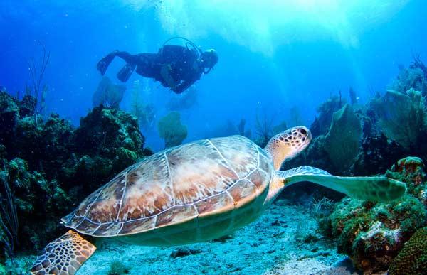 کارنامه و رتبه قبولی زیست شناسی دریا ارشد سراسری 98 - 99