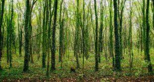 کارنامه و رتبه قبولی رشته علوم و مهندسی جنگل گرایش علوم زیستی جنگل مقطع دکتری دانشگاه سراسری