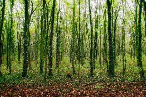 رتبه رشته علوم و مهندسی جنگل گرایش علوم زیستی جنگل مقطع دکتری دانشگاه سراسری 99 - 1400