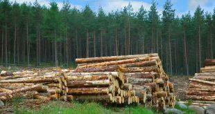کارنامه و رتبه قبولی رشته علوم و مهندسی جنگل گرایش عمران و بهره برداری جنگل مقطع دکتری دانشگاه سراسری