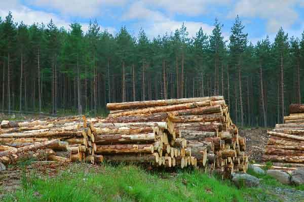 رتبه قبولی علوم و مهندسی جنگل گرایش عمران و بهره برداری جنگل دکتری سراسری 99 - 140