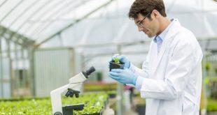 کارنامه و رتبه قبولی رشته بیماری شناسی گیاهی مقطع کارشناسی ارشد دانشگاه سراسری