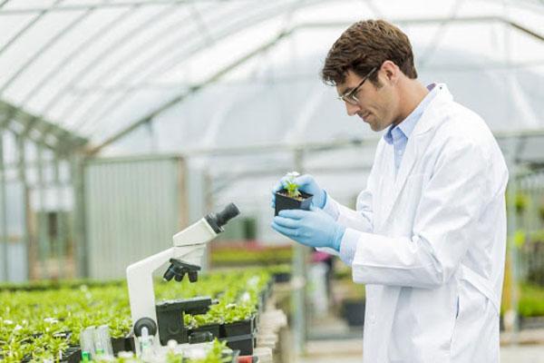 کارنامه و رتبه قبولی رشته بیماری شناسی گیاهی مقطع کارشناسی ارشد دانشگاه سراسری 99 – 1400